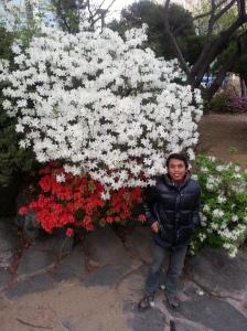 bunga semi SNU Korea Selatan