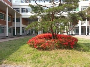 Bunga Semi Engineering building CNU Korea Selatan